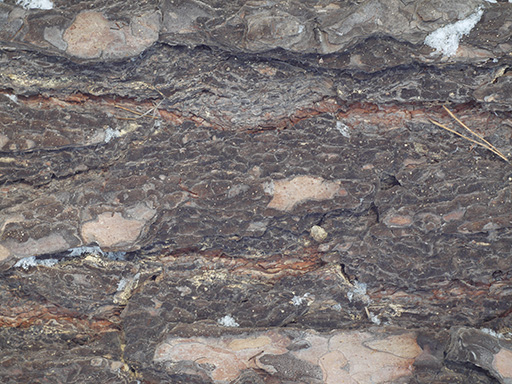 Pine tree bark texture 7_16_1_22 ( free, with source )