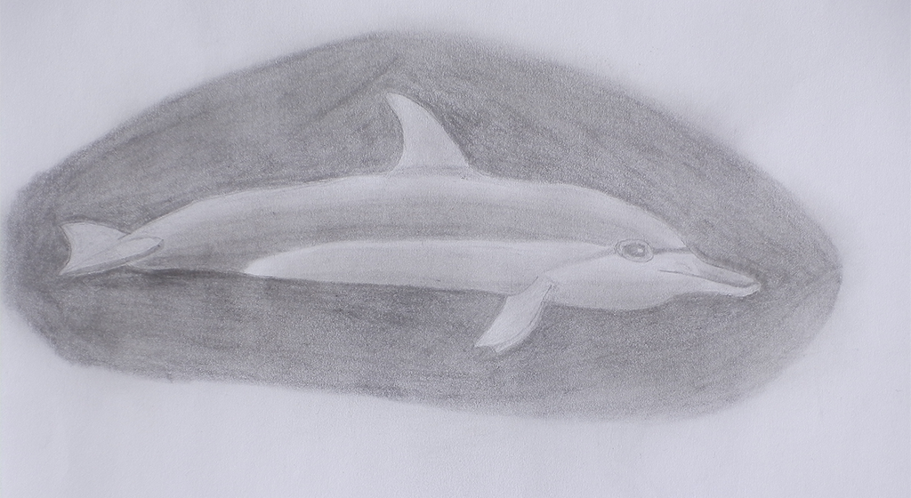 Pencil drawn dolphin