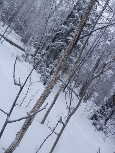 Raged aspen on the way to top of Berezovaya mountain