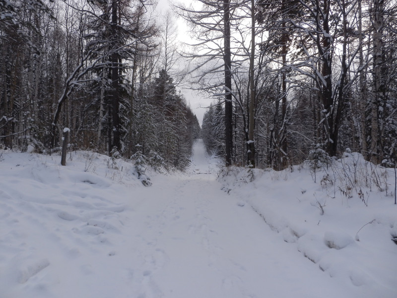 Road to Berezovaya mountain